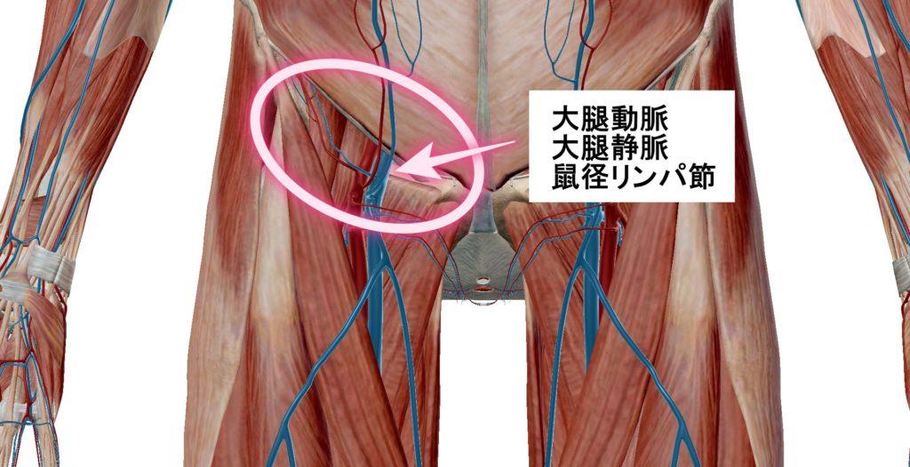 足がむくむ原因 鼠径部の血管