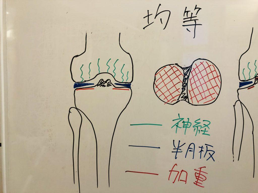 ウォーキングをして膝が痛い人 正常な荷重