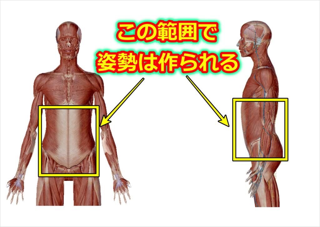 正しい姿勢を作る時に使う体の範囲